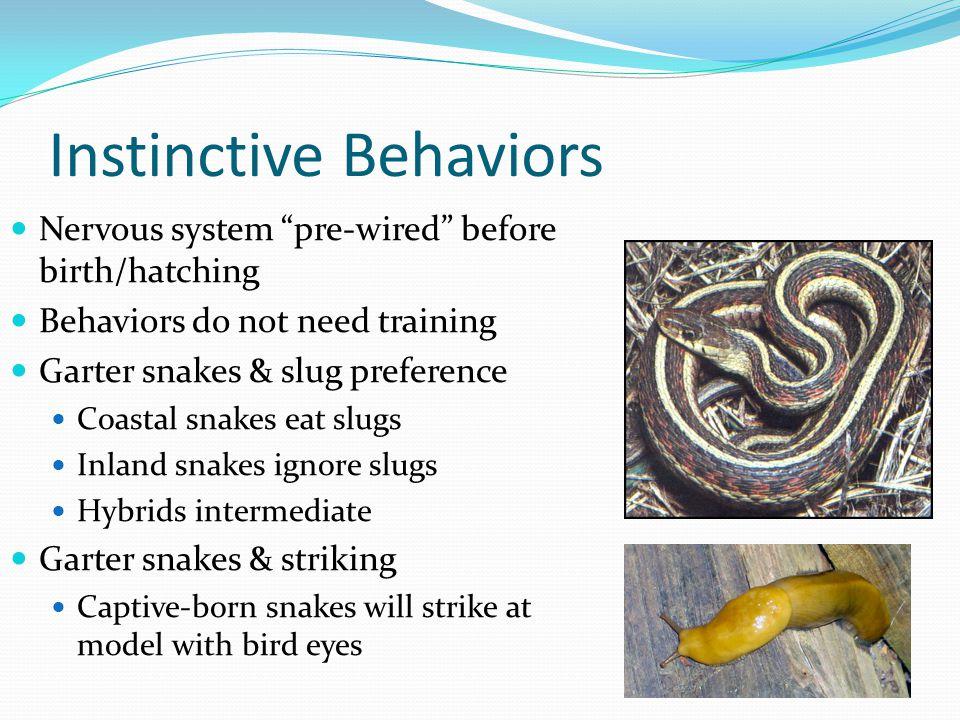"Instinctive Behaviors Nervous system ""pre-wired"" before birth/hatching Behaviors do not need training Garter snakes & slug preference Coastal snakes e"