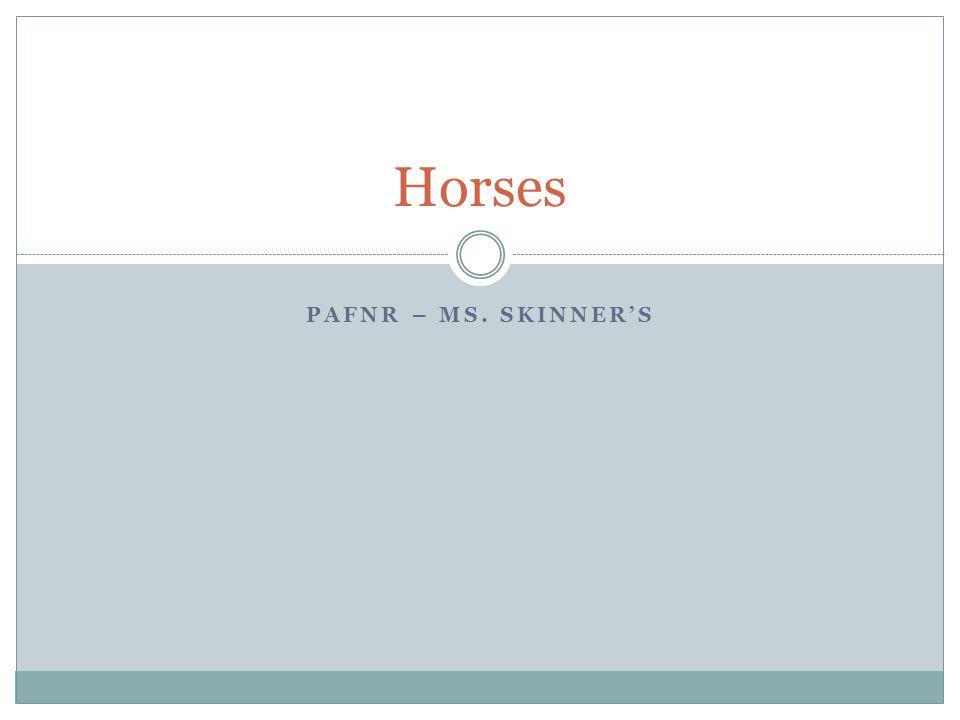 PAFNR – MS. SKINNER'S Horses