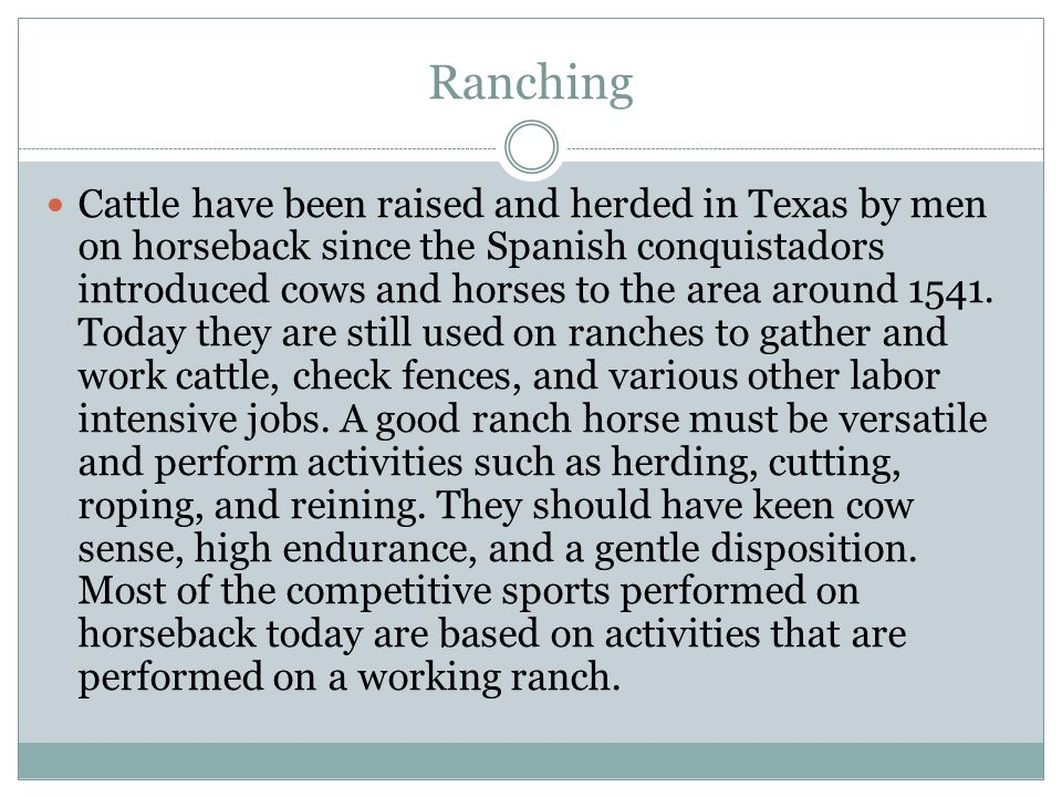 Ranching Cattle have been raised and herded in Texas by men on horseback since the Spanish conquistadors introduced cows and horses to the area around