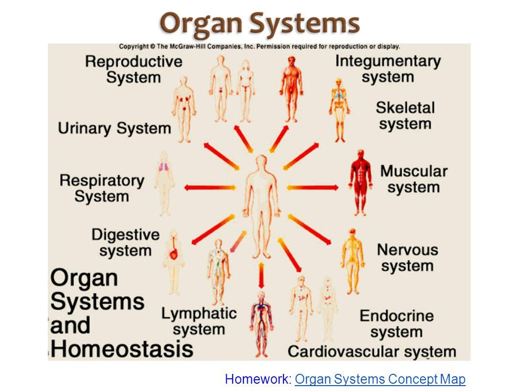 Homework: Organ Systems Concept MapOrgan Systems Concept Map
