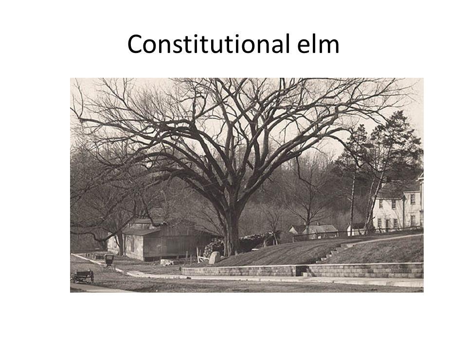 Constitutional elm