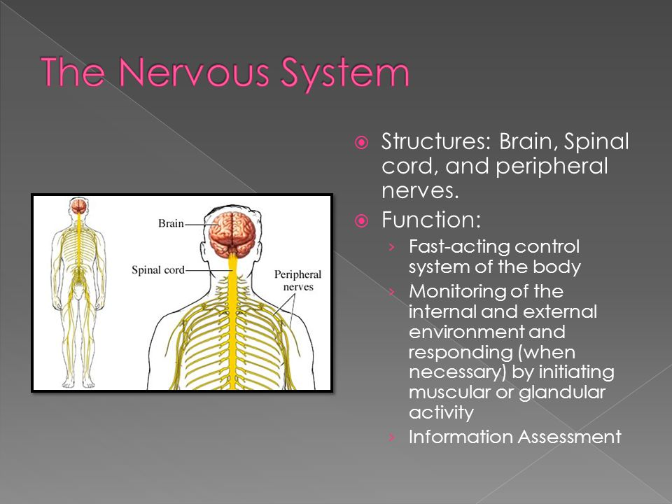  Structures: Brain, Spinal cord, and peripheral nerves.