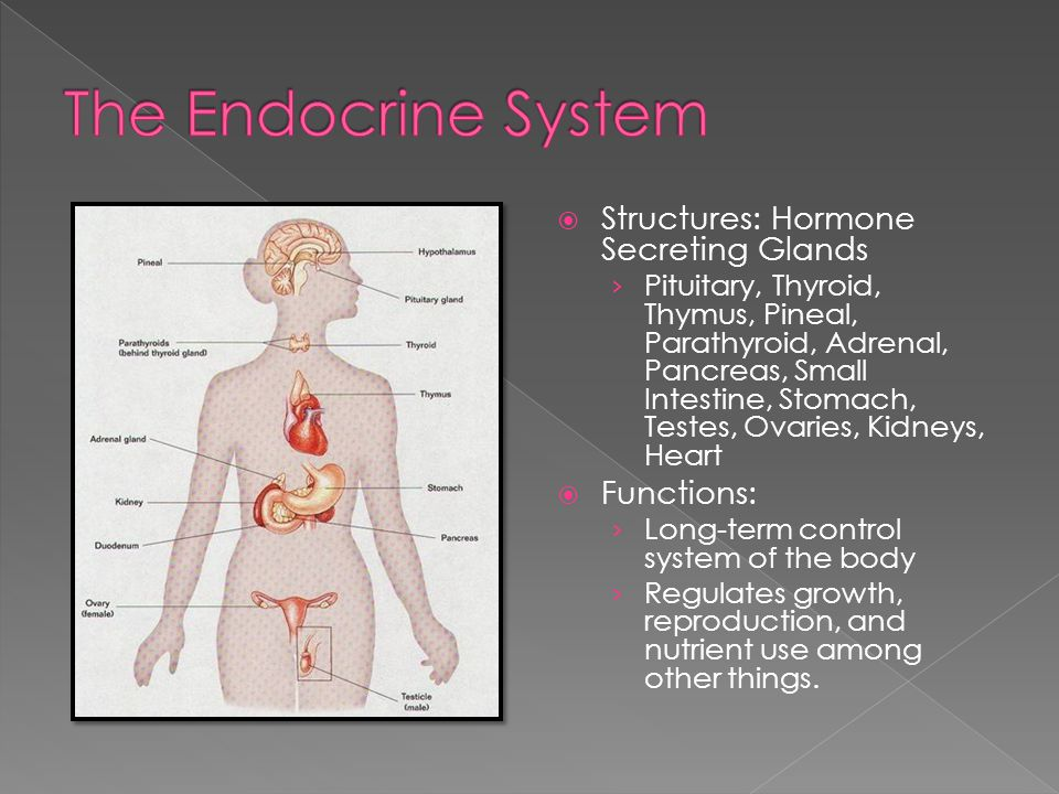  Structures: Hormone Secreting Glands › Pituitary, Thyroid, Thymus, Pineal, Parathyroid, Adrenal, Pancreas, Small Intestine, Stomach, Testes, Ovaries, Kidneys, Heart  Functions: › Long-term control system of the body › Regulates growth, reproduction, and nutrient use among other things.