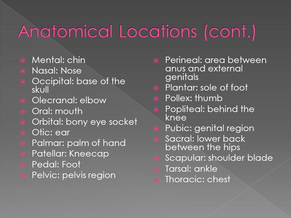  Mental: chin  Nasal: Nose  Occipital: base of the skull  Olecranal: elbow  Oral: mouth  Orbital: bony eye socket  Otic: ear  Palmar: palm of