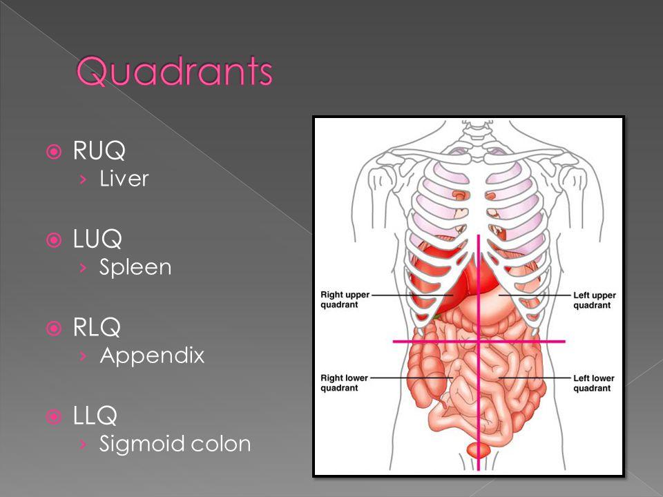  RUQ › Liver  LUQ › Spleen  RLQ › Appendix  LLQ › Sigmoid colon