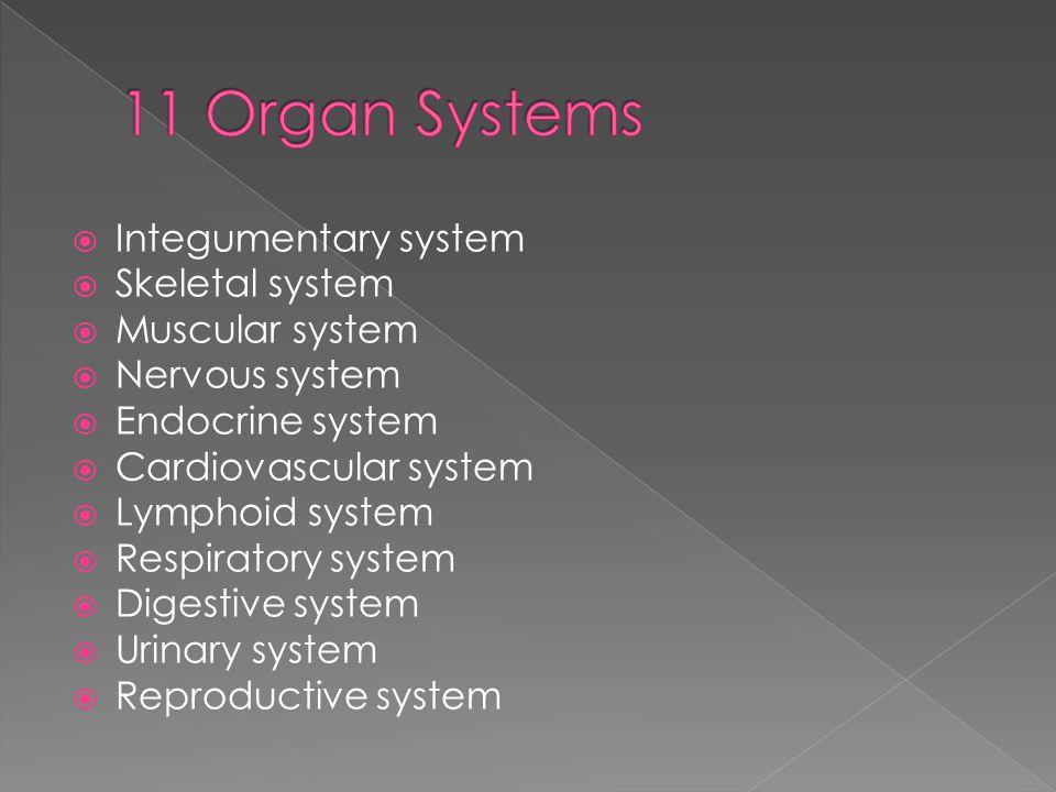  Integumentary system  Skeletal system  Muscular system  Nervous system  Endocrine system  Cardiovascular system  Lymphoid system  Respiratory system  Digestive system  Urinary system  Reproductive system