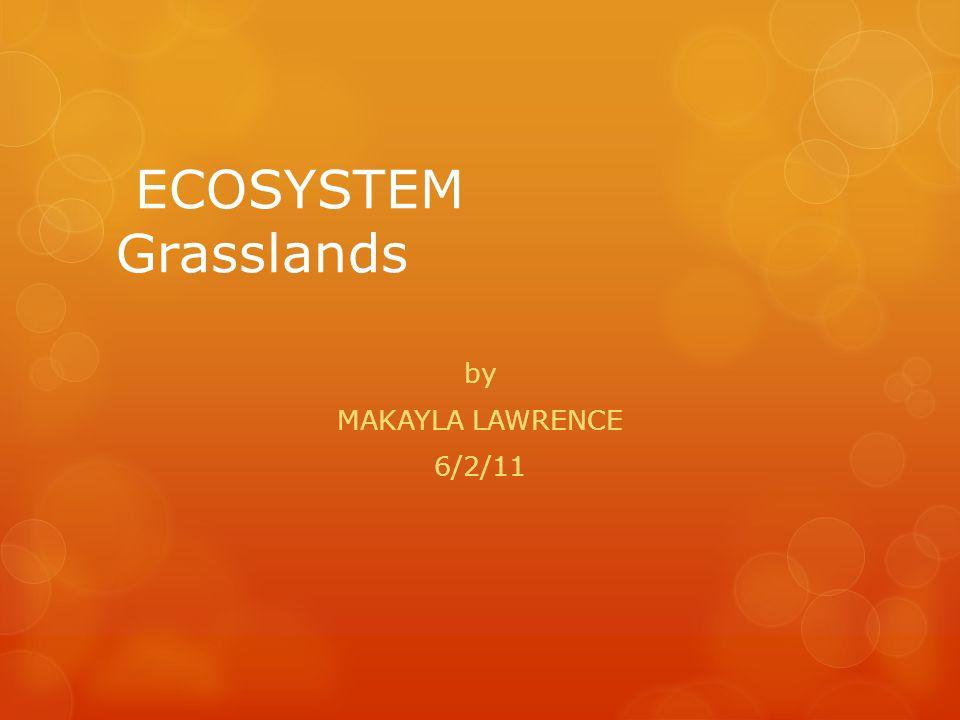 ECOSYSTEM Grasslands by MAKAYLA LAWRENCE 6/2/11