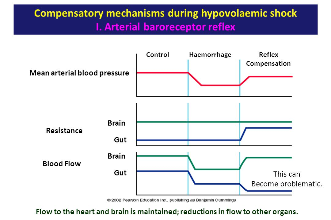 Flow to the heart and brain is maintained; reductions in flow to other organs. ControlHaemorrhageReflex Compensation Mean arterial blood pressure Resi
