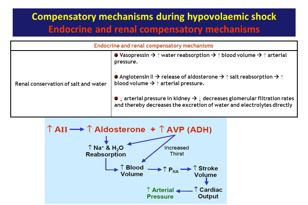 Endocrine and renal compensatory mechanisms Renal conservation of salt and water Vasopressin  ↑ water reabsorption  ↑ blood volume  ↑ arterial pres