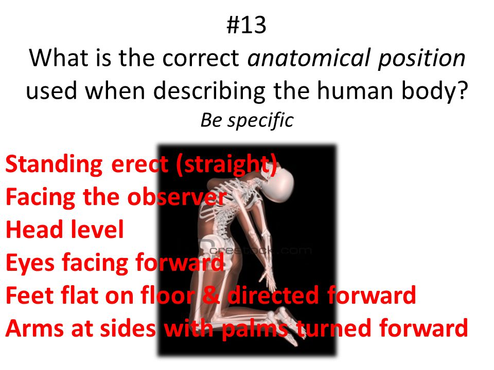#13 What is the correct anatomical position used when describing the human body? Be specific Standing erect (straight) Facing the observer Head level