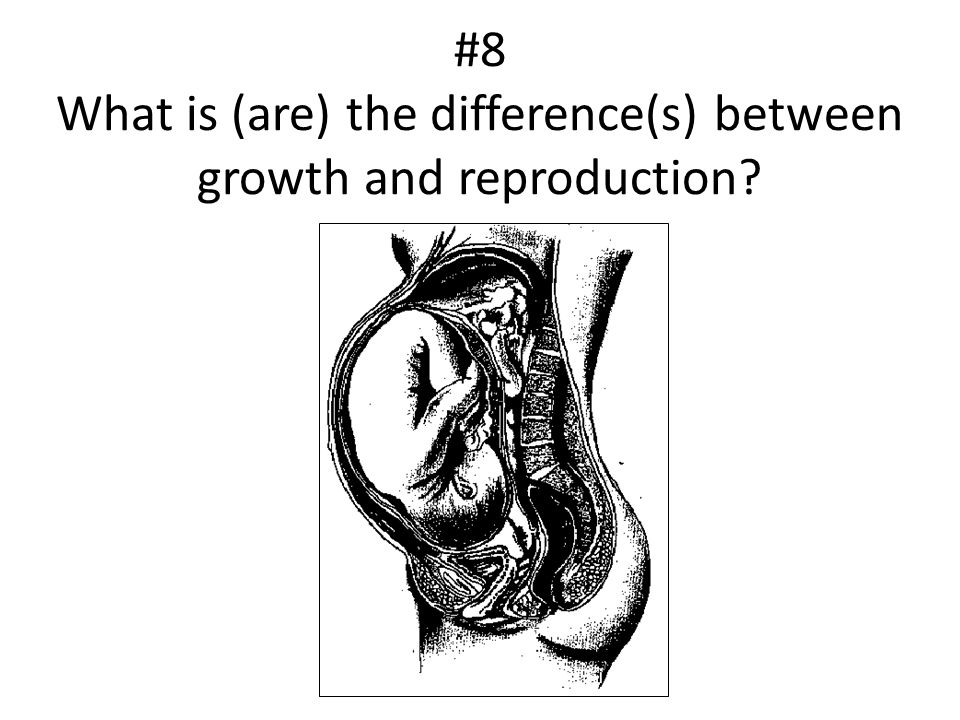#8 What is (are) the difference(s) between growth and reproduction?