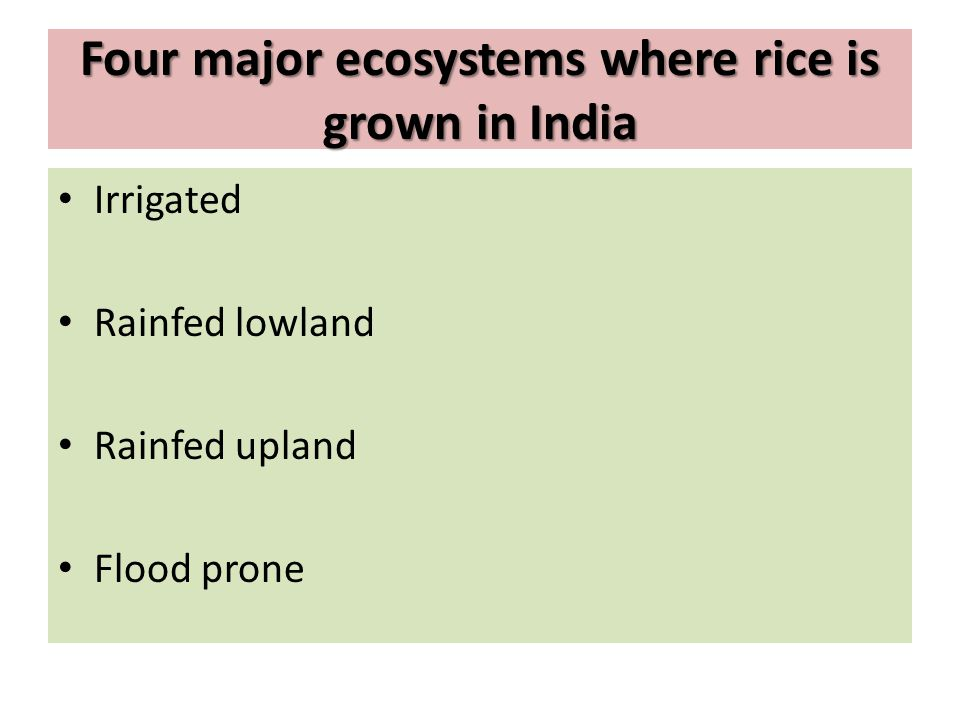 Four major ecosystems where rice is grown in India Irrigated Rainfed lowland Rainfed upland Flood prone
