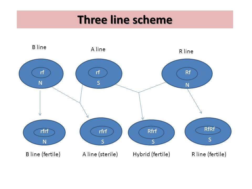 Two-line method The two lines are involved in a cross for hybrid rice seed production.
