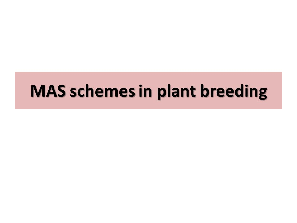 Marker assisted backcrossing Three levels of selection in which markers may be applied in backcross breeding.