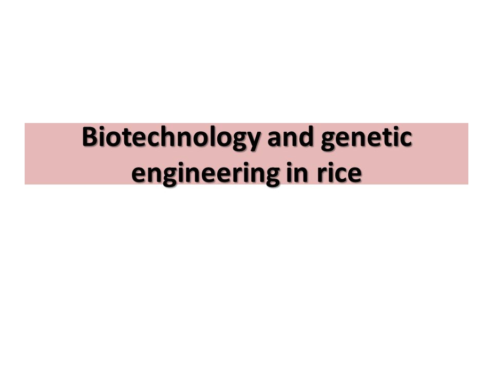 Biotechnology and genetic engineering in rice