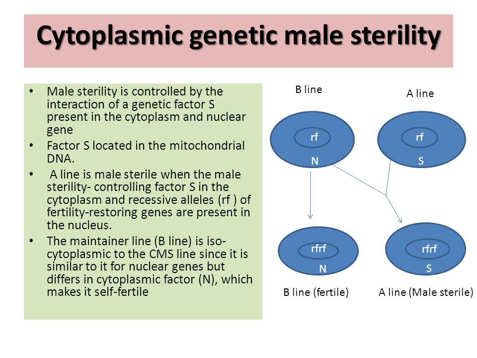 Cytoplasmic genetic male sterility Male sterility is controlled by the interaction of a genetic factor S present in the cytoplasm and nuclear gene Fac
