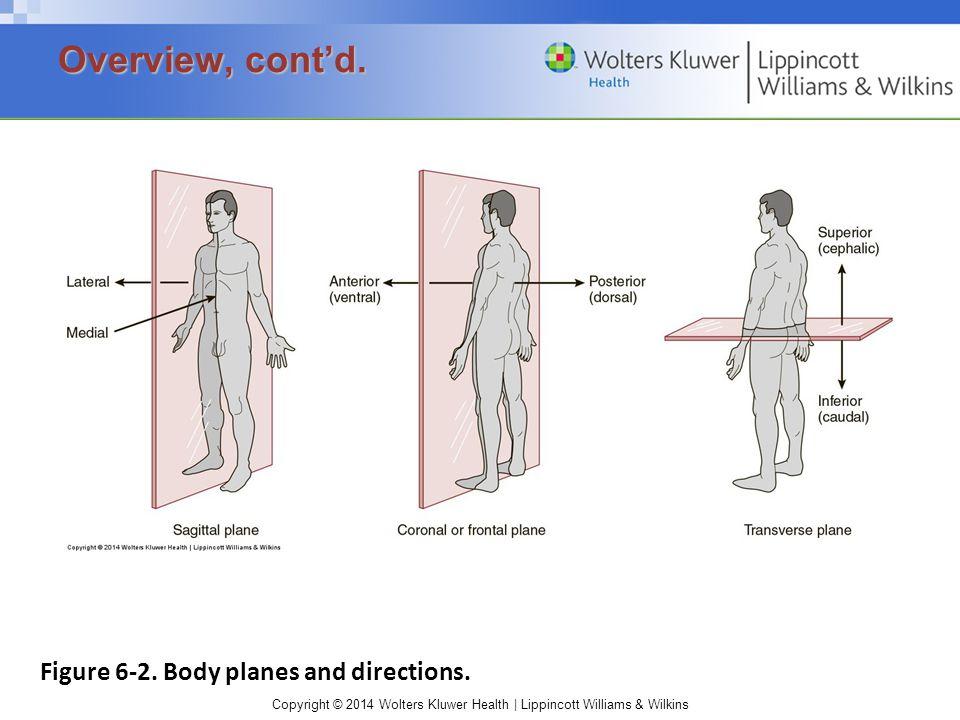 Copyright © 2014 Wolters Kluwer Health | Lippincott Williams & Wilkins Figure 6-2.