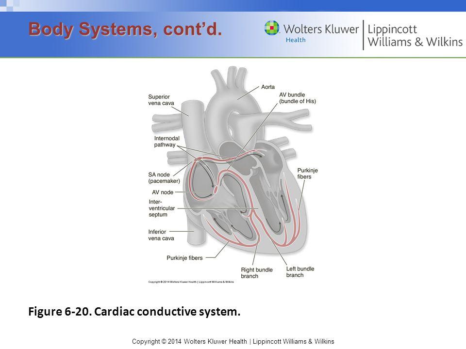 Copyright © 2014 Wolters Kluwer Health | Lippincott Williams & Wilkins Figure 6-20.