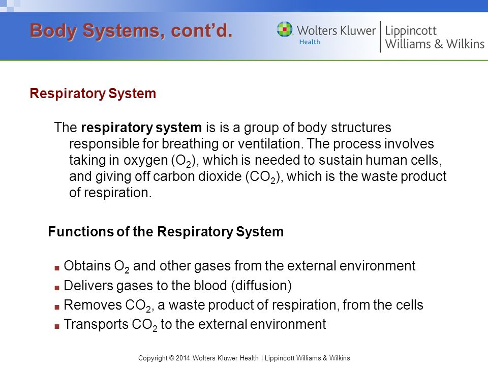 Copyright © 2014 Wolters Kluwer Health | Lippincott Williams & Wilkins Respiratory System The respiratory system is is a group of body structures responsible for breathing or ventilation.