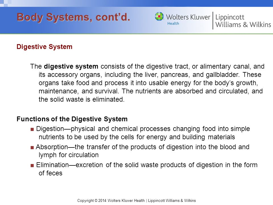 Copyright © 2014 Wolters Kluwer Health | Lippincott Williams & Wilkins Digestive System The digestive system consists of the digestive tract, or alimentary canal, and its accessory organs, including the liver, pancreas, and gallbladder.