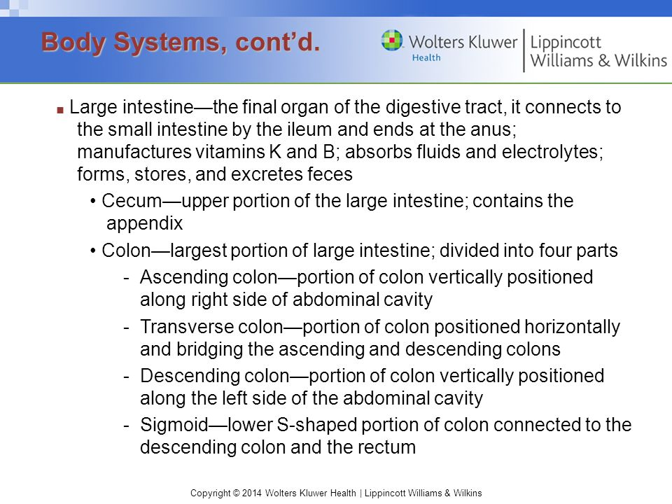 Copyright © 2014 Wolters Kluwer Health | Lippincott Williams & Wilkins ■ Large intestine—the final organ of the digestive tract, it connects to the sm