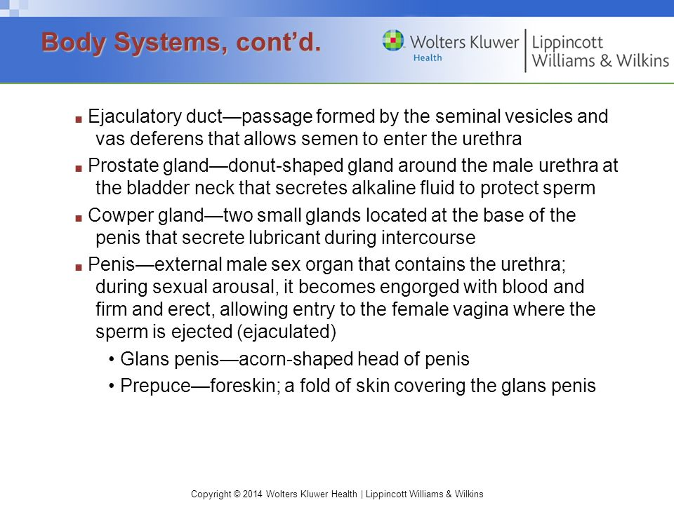 Copyright © 2014 Wolters Kluwer Health | Lippincott Williams & Wilkins ■ Ejaculatory duct—passage formed by the seminal vesicles and vas deferens that allows semen to enter the urethra ■ Prostate gland—donut-shaped gland around the male urethra at the bladder neck that secretes alkaline fluid to protect sperm ■ Cowper gland—two small glands located at the base of the penis that secrete lubricant during intercourse ■ Penis—external male sex organ that contains the urethra; during sexual arousal, it becomes engorged with blood and firm and erect, allowing entry to the female vagina where the sperm is ejected (ejaculated) Glans penis—acorn-shaped head of penis Prepuce—foreskin; a fold of skin covering the glans penis Body Systems, cont'd.