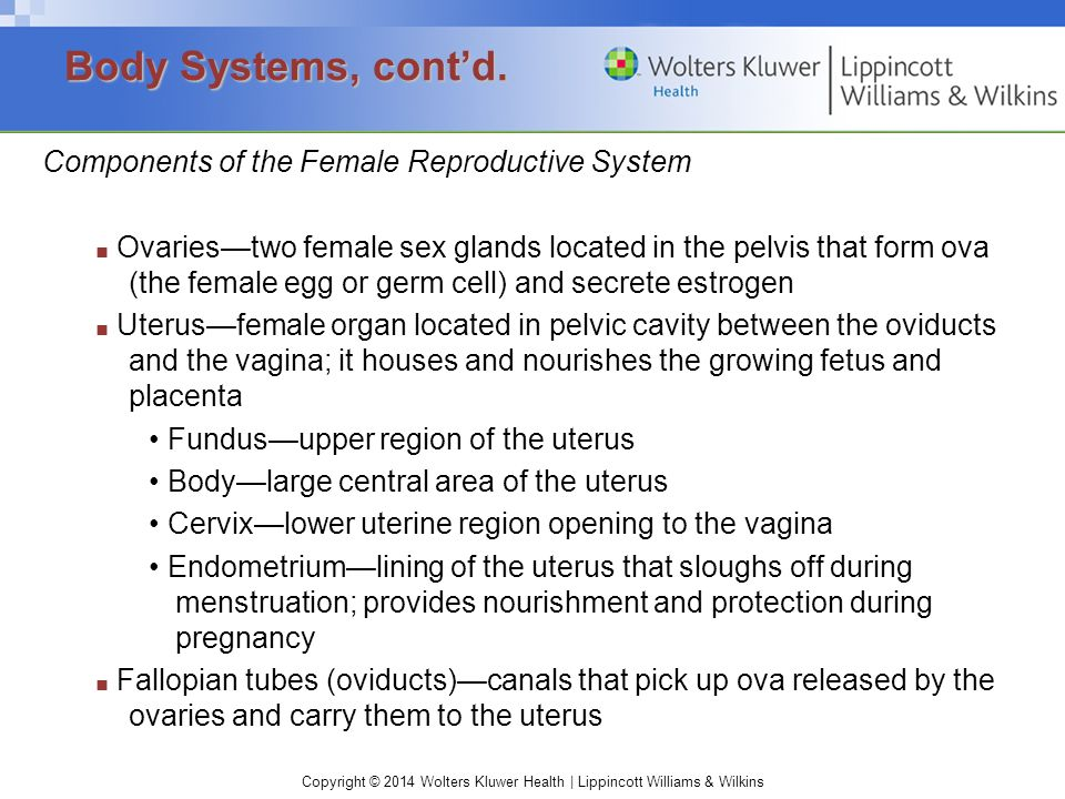 Copyright © 2014 Wolters Kluwer Health | Lippincott Williams & Wilkins Components of the Female Reproductive System ■ Ovaries—two female sex glands lo