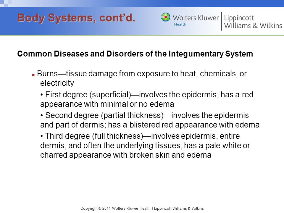 Copyright © 2014 Wolters Kluwer Health | Lippincott Williams & Wilkins Common Diseases and Disorders of the Integumentary System ■ Burns—tissue damage from exposure to heat, chemicals, or electricity First degree (superficial)—involves the epidermis; has a red appearance with minimal or no edema Second degree (partial thickness)—involves the epidermis and part of dermis; has a blistered red appearance with edema Third degree (full thickness)—involves epidermis, entire dermis, and often the underlying tissues; has a pale white or charred appearance with broken skin and edema Body Systems, cont'd.