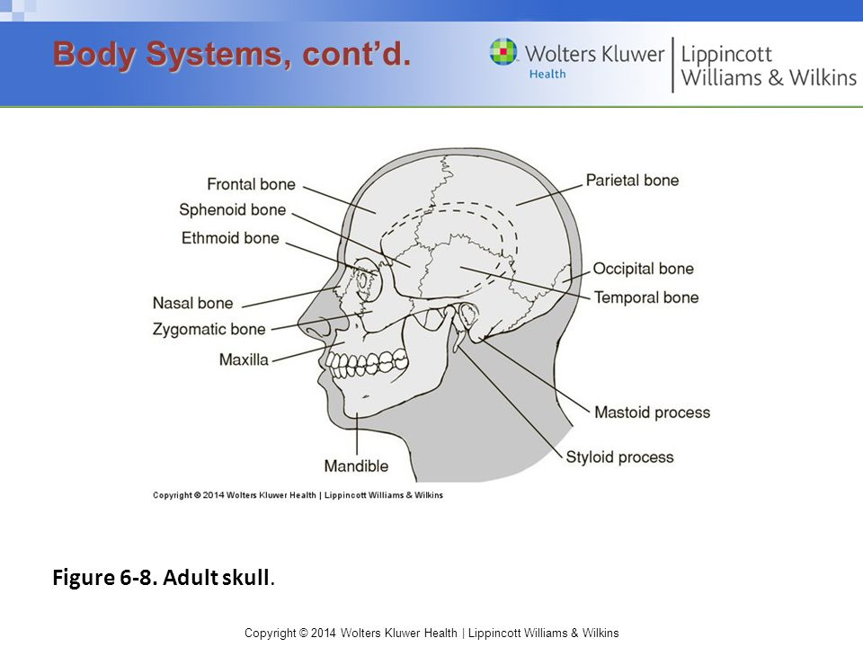 Copyright © 2014 Wolters Kluwer Health | Lippincott Williams & Wilkins Figure 6-8. Adult skull. Body Systems, cont'd.