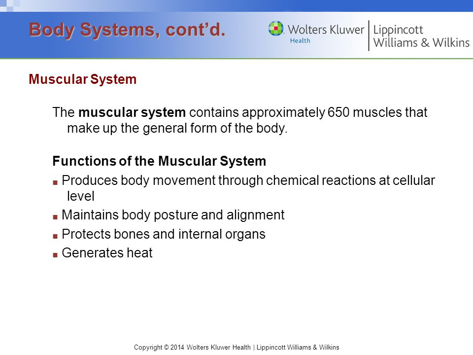 Copyright © 2014 Wolters Kluwer Health | Lippincott Williams & Wilkins Muscular System The muscular system contains approximately 650 muscles that mak