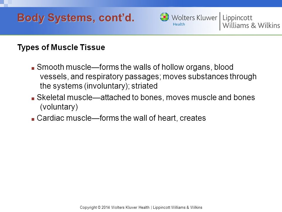 Copyright © 2014 Wolters Kluwer Health | Lippincott Williams & Wilkins Types of Muscle Tissue ■ Smooth muscle—forms the walls of hollow organs, blood