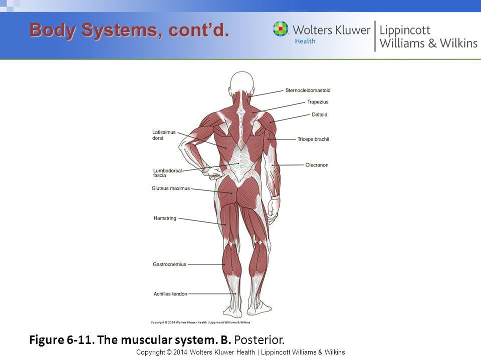 Copyright © 2014 Wolters Kluwer Health | Lippincott Williams & Wilkins Figure 6-11.