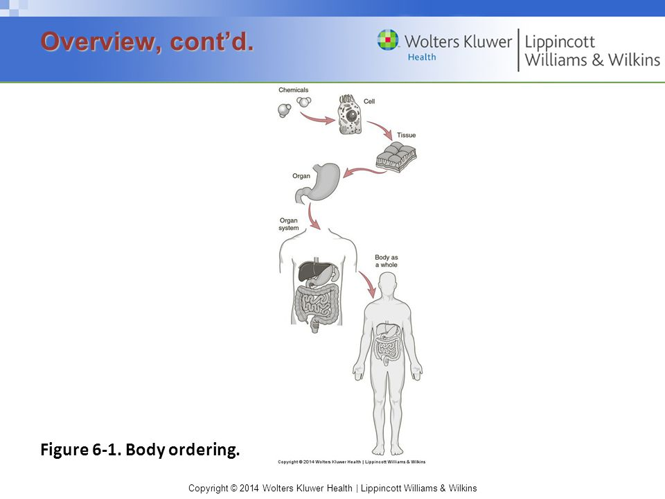 Copyright © 2014 Wolters Kluwer Health | Lippincott Williams & Wilkins Figure 6-1. Body ordering. Overview, cont'd.