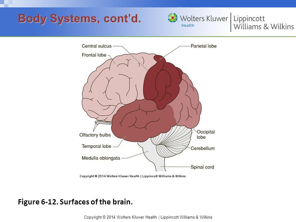 Copyright © 2014 Wolters Kluwer Health | Lippincott Williams & Wilkins Figure 6-12.