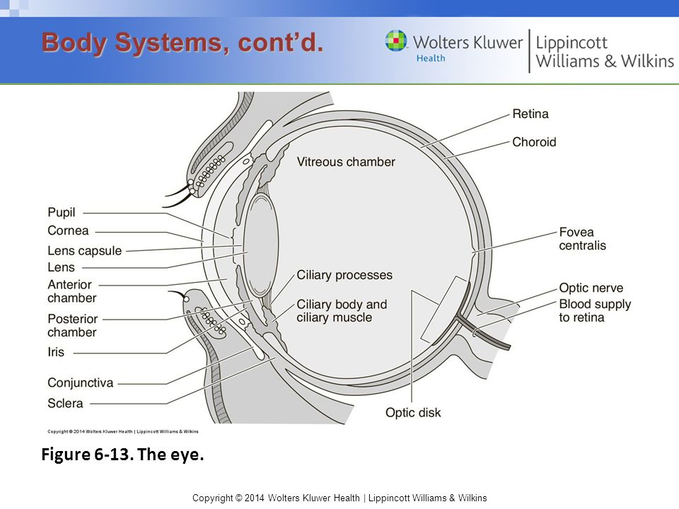 Copyright © 2014 Wolters Kluwer Health | Lippincott Williams & Wilkins Figure 6-13. The eye. Body Systems, cont'd.