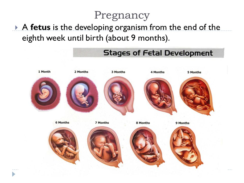 Pregnancy  A fetus is the developing organism from the end of the eighth week until birth (about 9 months).