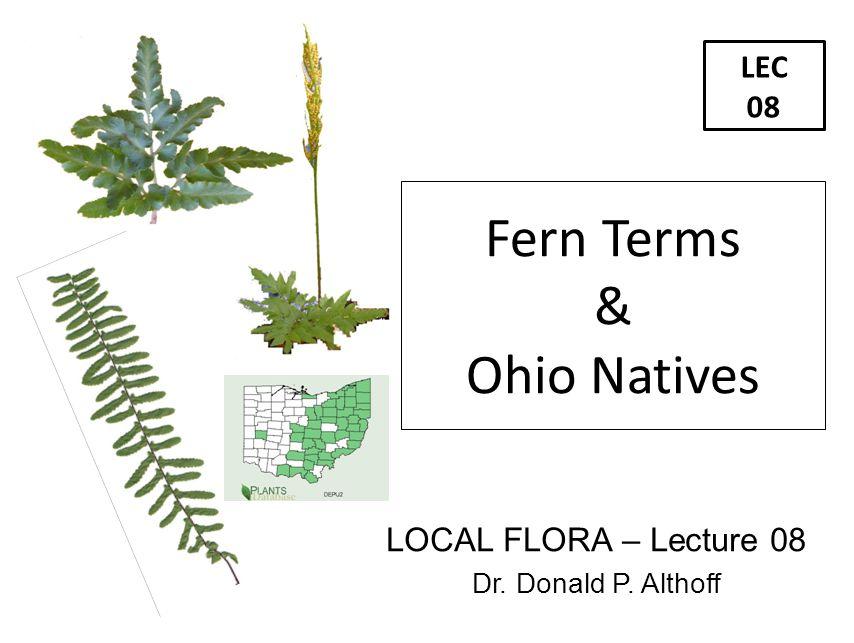 LEC 08 LOCAL FLORA – Lecture 08 Dr. Donald P. Althoff Fern Terms & Ohio Natives