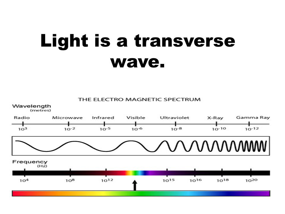 Light is a transverse wave.
