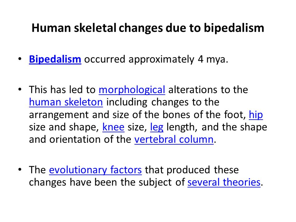 Human skeletal changes due to bipedalism Bipedalism occurred approximately 4 mya. Bipedalism This has led to morphological alterations to the human sk