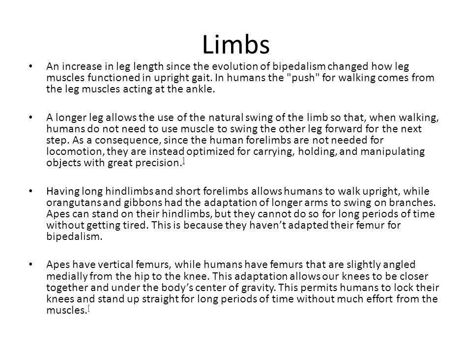 Limbs An increase in leg length since the evolution of bipedalism changed how leg muscles functioned in upright gait. In humans the