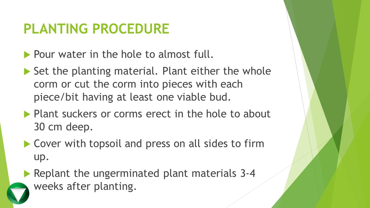 PLANTING PROCEDURE  Pour water in the hole to almost full.