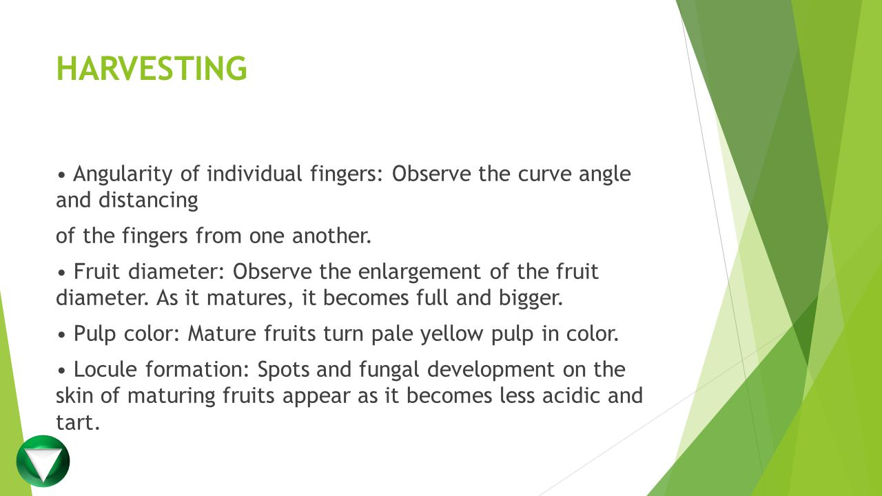 HARVESTING Angularity of individual fingers: Observe the curve angle and distancing of the fingers from one another.