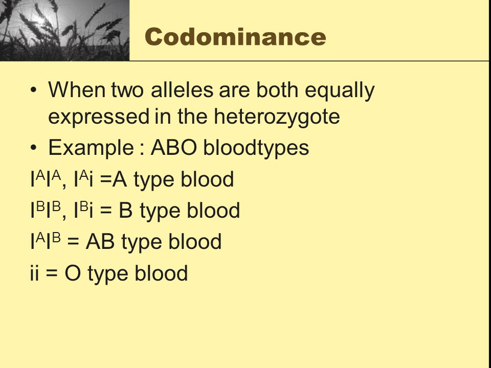 Codominance When two alleles are both equally expressed in the heterozygote Example : ABO bloodtypes I A I A, I A i =A type blood I B I B, I B i = B type blood I A I B = AB type blood ii = O type blood
