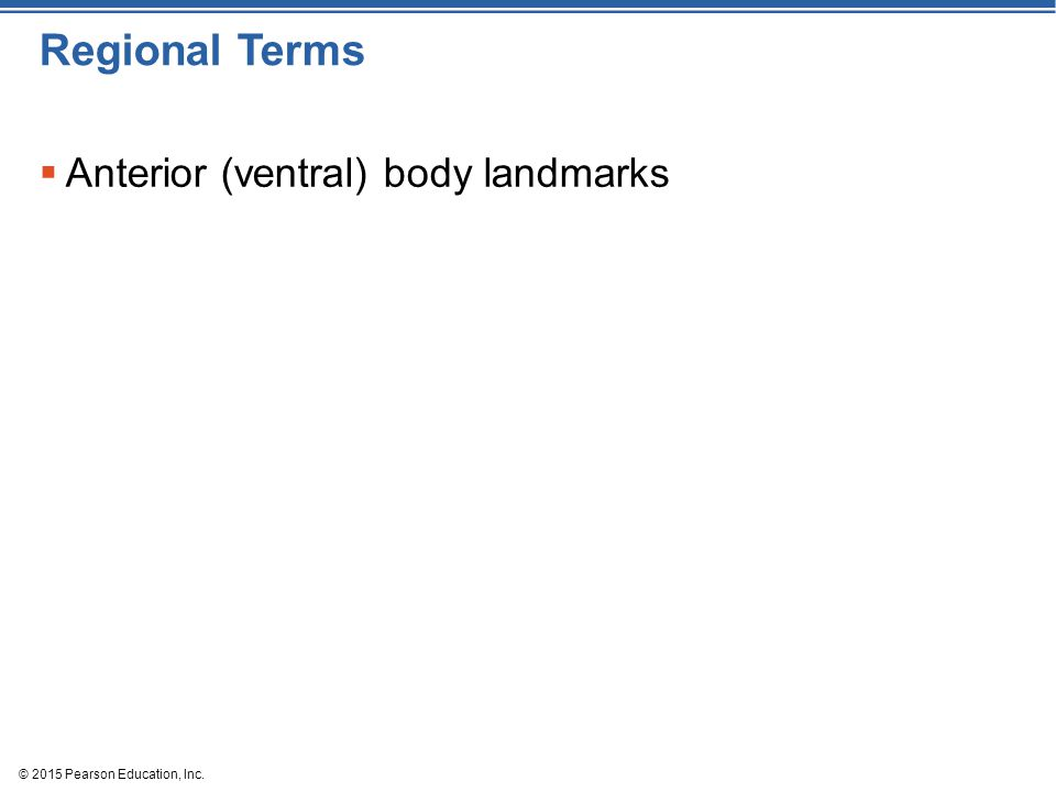 © 2015 Pearson Education, Inc. Regional Terms  Anterior (ventral) body landmarks