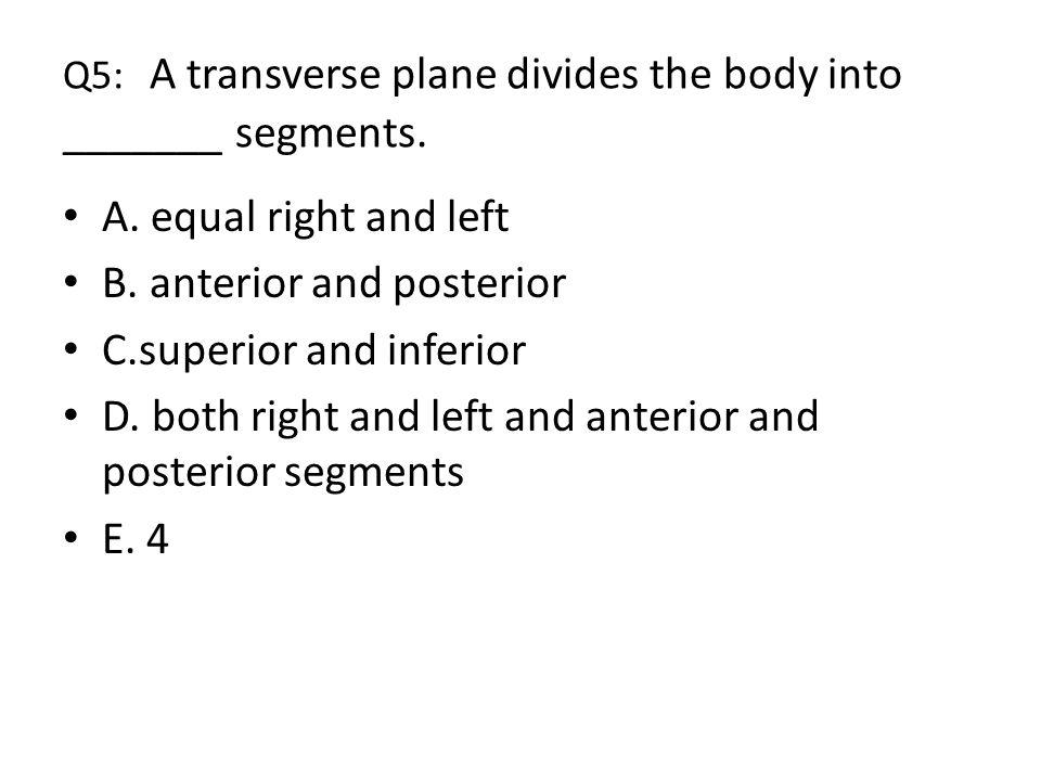 Q5: A transverse plane divides the body into _______ segments.