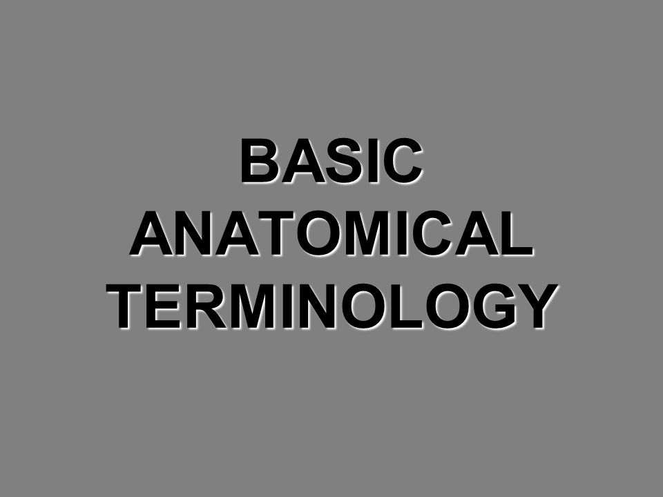 BASIC ANATOMICAL TERMINOLOGY