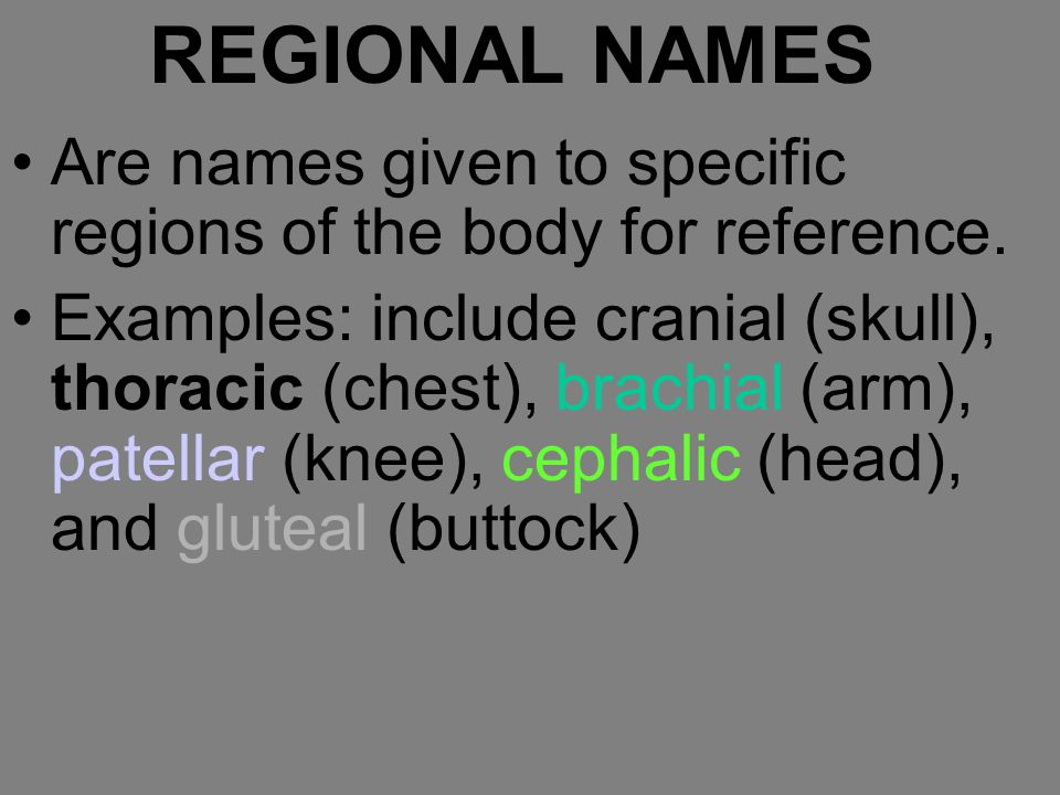 REGIONAL NAMES Are names given to specific regions of the body for reference. Examples: include cranial (skull), thoracic (chest), brachial (arm), pat