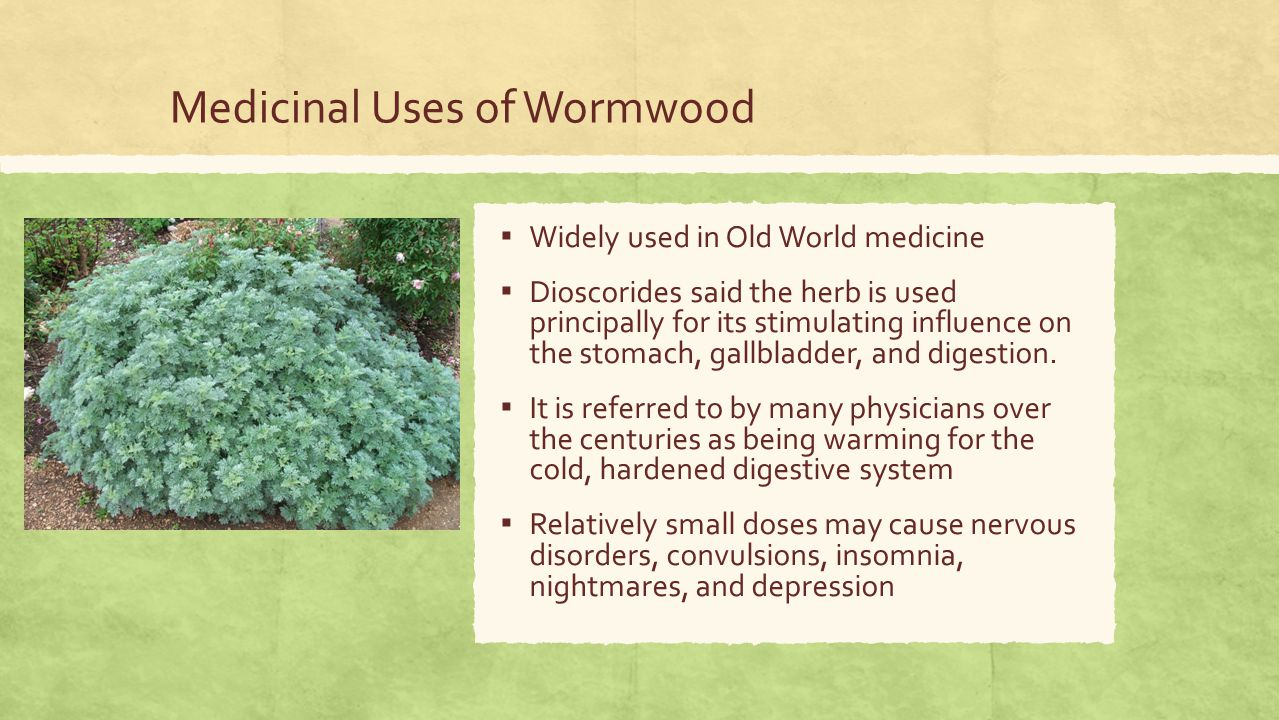 Medicinal Uses of Wormwood ▪ Widely used in Old World medicine ▪ Dioscorides said the herb is used principally for its stimulating influence on the stomach, gallbladder, and digestion.