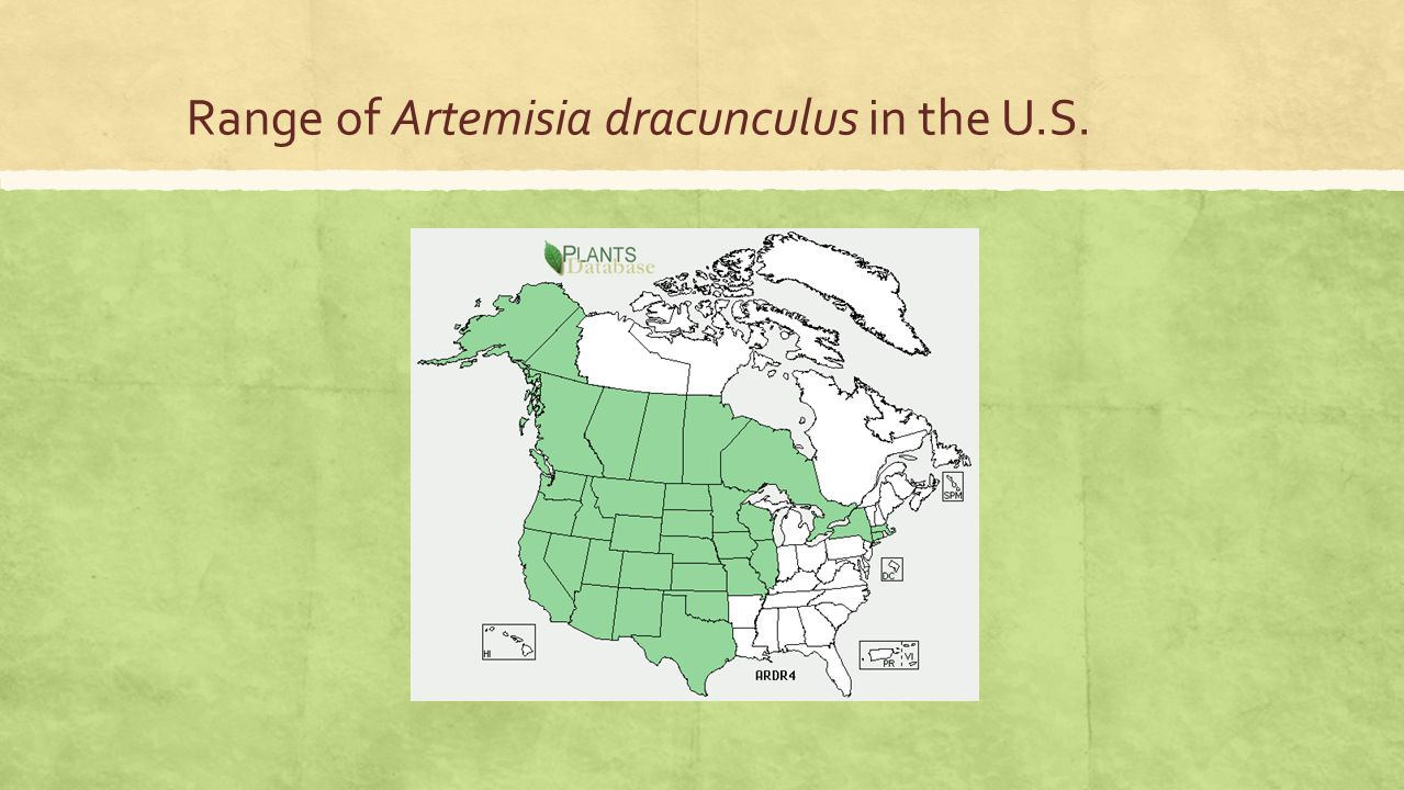 Range of Artemisia dracunculus in the U.S.