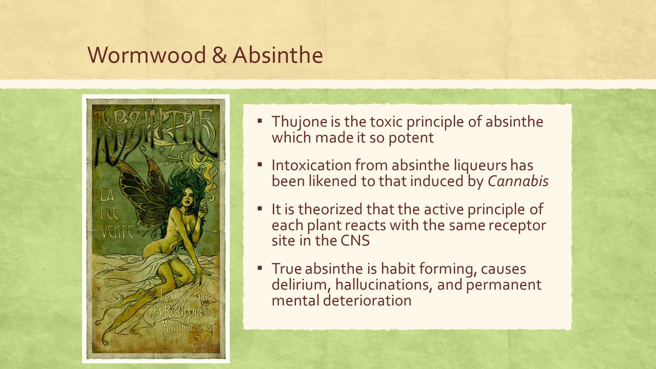 Wormwood & Absinthe ▪ Thujone is the toxic principle of absinthe which made it so potent ▪ Intoxication from absinthe liqueurs has been likened to that induced by Cannabis ▪ It is theorized that the active principle of each plant reacts with the same receptor site in the CNS ▪ True absinthe is habit forming, causes delirium, hallucinations, and permanent mental deterioration
